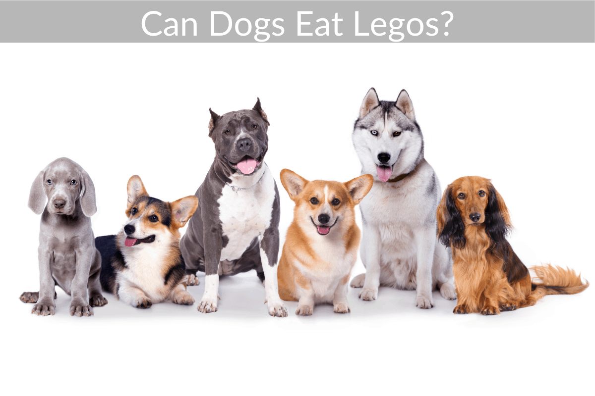 Can Dogs Eat Legos