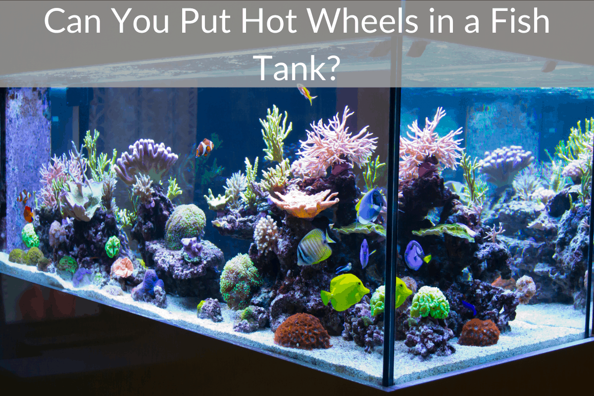 Can You Put Hot Wheels in a Fish Tank?