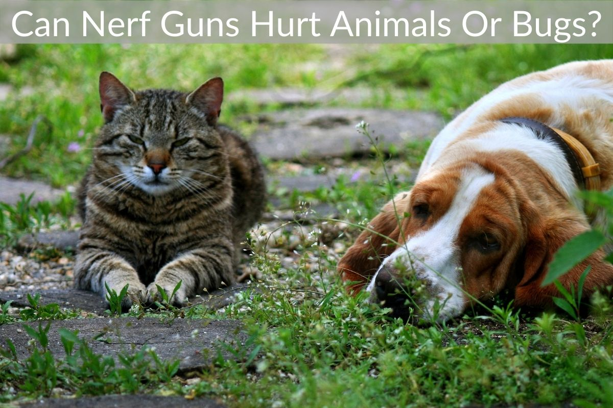 Can Nerf Guns Hurt Animals Or Bugs?