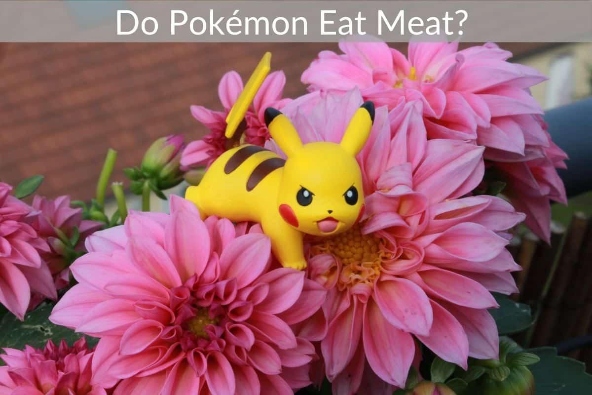 Do Pokémon Eat Meat?