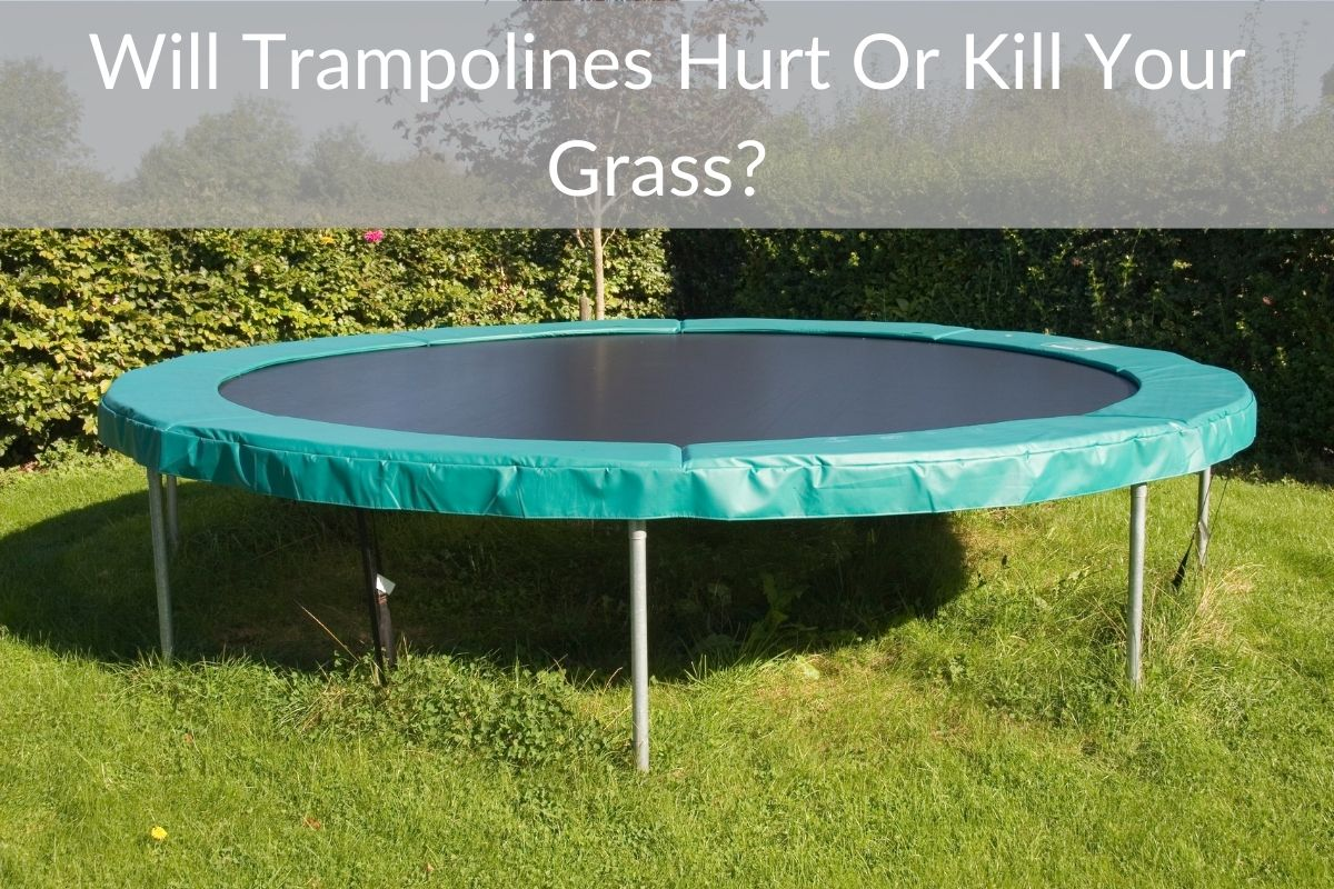 Will Trampolines Hurt Or Kill Your Grass?
